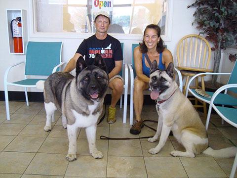 Shiba Inu Puppies In Virginia Beach